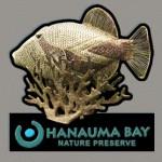 Hanuama-Bay Souvenir Magnet