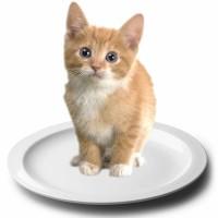 1 cat 1 dish