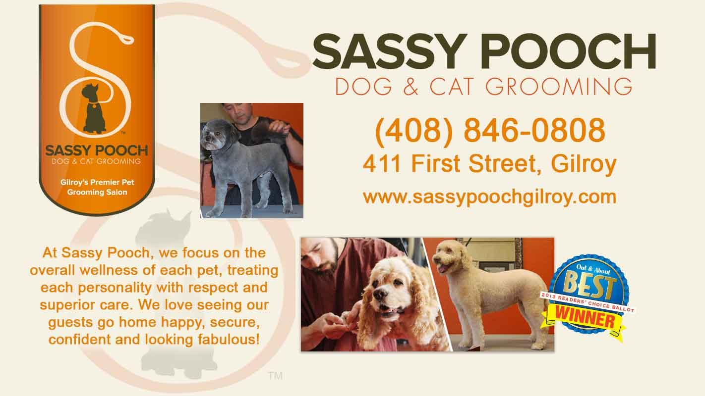 sassy-pooch-Screen-Ad