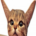 Anamorphic Cat Face